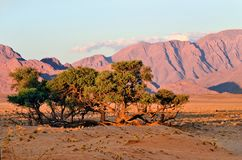 Sossusvlei, Namib Naukluft National Park, Namibia. Beautiful namibian landscape at sunset, Sossusvlei, Namib Naukluft National Park, Namibia, Africa Stock Photos