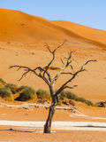 Sossusvlei stock photography