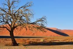 Sossusvlei Namib Naukluft nationalpark, Namibia Arkivfoto