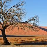 Sossusvlei Namib Naukluft nationalpark, Namibia Royaltyfri Fotografi