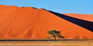 Sossusvlei Namib Naukluft nationalpark, Namibia Arkivbild