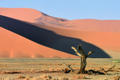 Sossusvlei, Namib Naukluft park narodowy, Namibia Obrazy Royalty Free