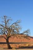Sossusvlei, Namib Naukluft park narodowy, Namibia Obraz Stock
