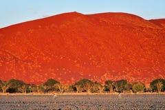 Sossusvlei, Namib Naukluft park narodowy, Namibia Zdjęcia Stock