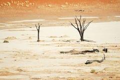 Sossusvlei, Namib Naukluft park narodowy, Namibia Obraz Royalty Free