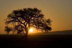 Sossusvlei, Namibië stock afbeelding