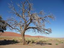 Sossusvlei Namibië Dune45 Royalty-vrije Stock Afbeeldingen