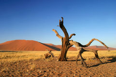 Sossusvlei in Namibia Royalty Free Stock Photos