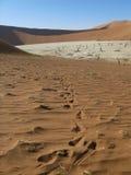 Sossusvlei Namibia Fotografia Stock Libera da Diritti