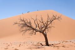 Sossusvlei Namibia royaltyfria foton
