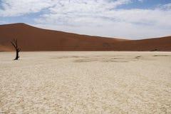 Sossusvlei, Namibia Obrazy Stock