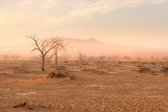 Sossusvlei, Namibia. Acacia tree and sand dunes in morning light, mist and fog. Namib desert, roadtrip in the Namib Naukluft Natio. Nal Park, travel destination Royalty Free Stock Photography
