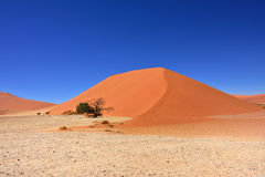 Sossusvlei Namibia Africa. Dune 45 in sossusvlei Namibia with green tree, best of Namibia landscape stock photo