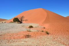 Sossusvlei Namibia Africa. Dune 45 in Sossusvlei Namibia with green tree, best of Namibia landscape stock images