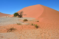 Sossusvlei Namibia Africa. Dune 45 in Sossusvlei Namibia with green tree, best of Namibia landscape stock photos