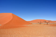 Sossusvlei Namibia Africa. Dune 45 in Sossusvlei Namibia with green tree, best of Namibia landscape royalty free stock photos