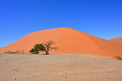 Sossusvlei Namibia Africa. Dune 45 in Sossusvlei Namibia with green tree, best of Namibia landscape royalty free stock photo