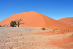 Sossusvlei Namibia Africa. Dune 45 in Sossusvlei Namibia with green tree. The most famous dune in the whole world stock photos