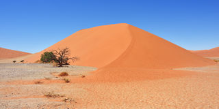 Sossusvlei Namibia Africa. Dune 45 in Sossusvlei Namibia with green tree. The most famous dune in the whole world stock photography