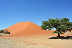 Sossusvlei Namibia Africa. Dune 45 in Sossusvlei Namibia with green trees around. The most famous dune in the whole world stock photo