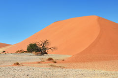Sossusvlei Namibia Africa, Dune 45. Dune 45 in Sossusvlei, most known dune in Namibia, best of Namibia landscape royalty free stock photography