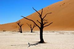 Sossusvlei Namibia di Deadvlei Immagine Stock