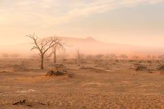 Sossusvlei, Namibia Dunas del árbol y de arena del acacia en luz, niebla y niebla de la mañana Desierto de Namib, roadtrip en el  fotografía de archivo libre de regalías