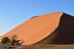 SOSSUSVLEI, NAMIBIA, DUNE 45. SOSSUSVLEI, NAMIBIA - JAN 29, 2016: Tourists climb Dune No.45 in a year that was declared as a drought year by the government in Stock Photo