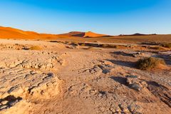 Sossusvlei Namibia, podróży miejsce przeznaczenia w Afryka Piasek diuny i gliny solankowa niecka z akacjowymi drzewami, Namib Nau Zdjęcia Royalty Free