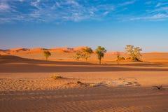 Sossusvlei Namibia, podróży miejsce przeznaczenia w Afryka Piasek diuny i gliny solankowa niecka z akacjowymi drzewami, Namib Nau Obrazy Stock