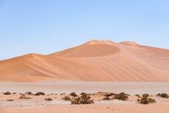 Sossusvlei Namibia, sal escénica de la arcilla plana con los árboles trenzados del acacia y las dunas de arena majestuosas Parque Foto de archivo libre de regalías