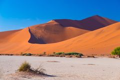 Sossusvlei Namibia, travel destination in Africa. Sand Dunes and clay salt pan with acacia trees, Namib Naukluft National Park, Na. Mib desert Stock Images