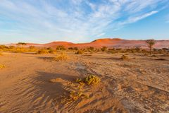Sossusvlei Namibia, travel destination in Africa. Sand Dunes and clay salt pan with acacia trees, Namib Naukluft National Park, Na. Mib desert Stock Image