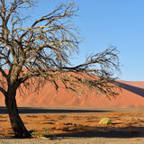 Sossusvlei, parc national de Namib Naukluft, Namibie Photographie stock libre de droits