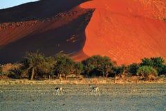 Sossusvlei, parc national de Namib Naukluft, Namibie Photographie stock libre de droits