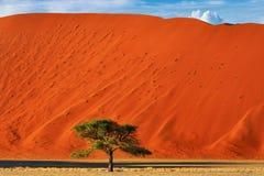 Sossusvlei, parco nazionale di Namib Naukluft, Namibia Fotografia Stock