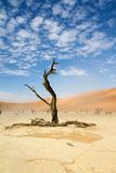 Sossusvlei park, Namibia. Dead trees in the Sossusvlei park, Namibia Stock Images