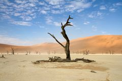 Sossusvlei park, Namibia. Dead trees in the Sossusvlei park, Namibia Stock Photo
