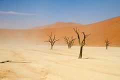 Sossusvlei park, Namibia. Dead trees in the Sossusvlei park, Namibia Royalty Free Stock Photography