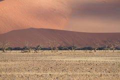 Sossusvlei park, Namibia Royalty Free Stock Photos