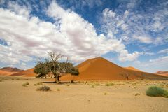 Sossusvlei park, Namibia. The red sand dune 45  of Sossusvlei park, Namibia Royalty Free Stock Image