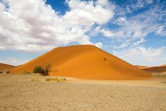 Sossusvlei park, Namibia. The red sand dune 45 of Sossusvlei park, Namibia Royalty Free Stock Photography