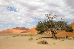 Sossusvlei park, Namibia. The red sand dunes of Sossusvlei park, Namibia Stock Photos