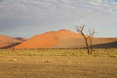 Sossusvlei park, Namibia. The sand dunes of Sossusvlei park, Namibia Stock Image