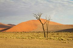 Sossusvlei park, Namibia. The sand dunes of Sossusvlei park, Namibia Stock Photography