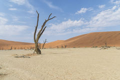 Sossusvlei. A photo of Sossuslvlei, a tourist place in Namibian desert royalty free stock image