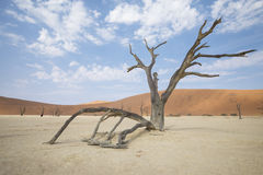 Sossusvlei. A photo of Sossuslvlei, a tourist place in Namibian desert stock photos