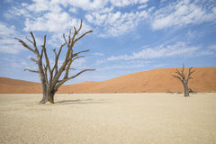 Sossusvlei. A photo of Sossuslvlei, a tourist place in Namibian desert royalty free stock photography