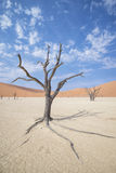 Sossusvlei. A photo of Sossuslvlei, a tourist place in Namibian desert royalty free stock photo