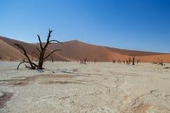 Sossusvlei Salt Pan Desert Landscape with Dead Trees, Dunes Royalty Free Stock Photography